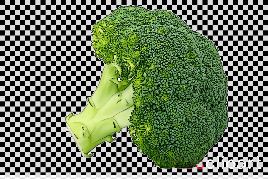 broccoli leaf vegetable vegetable plant food
