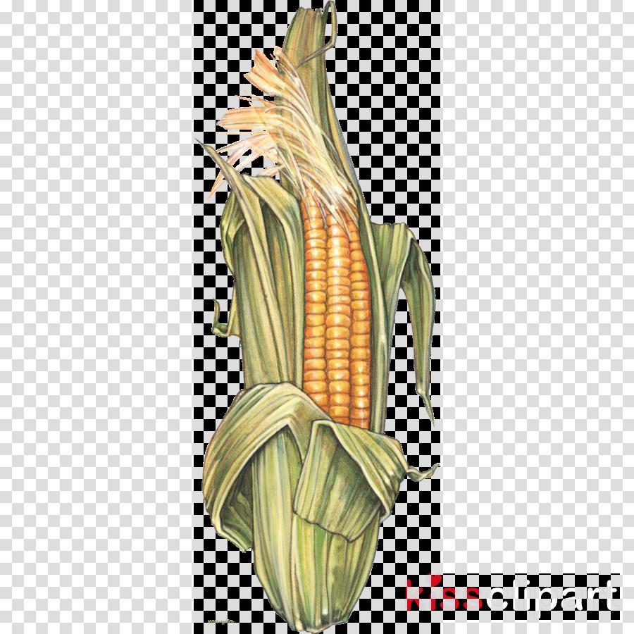 corn on the cob corn sweet corn corn kernels corn on the cob