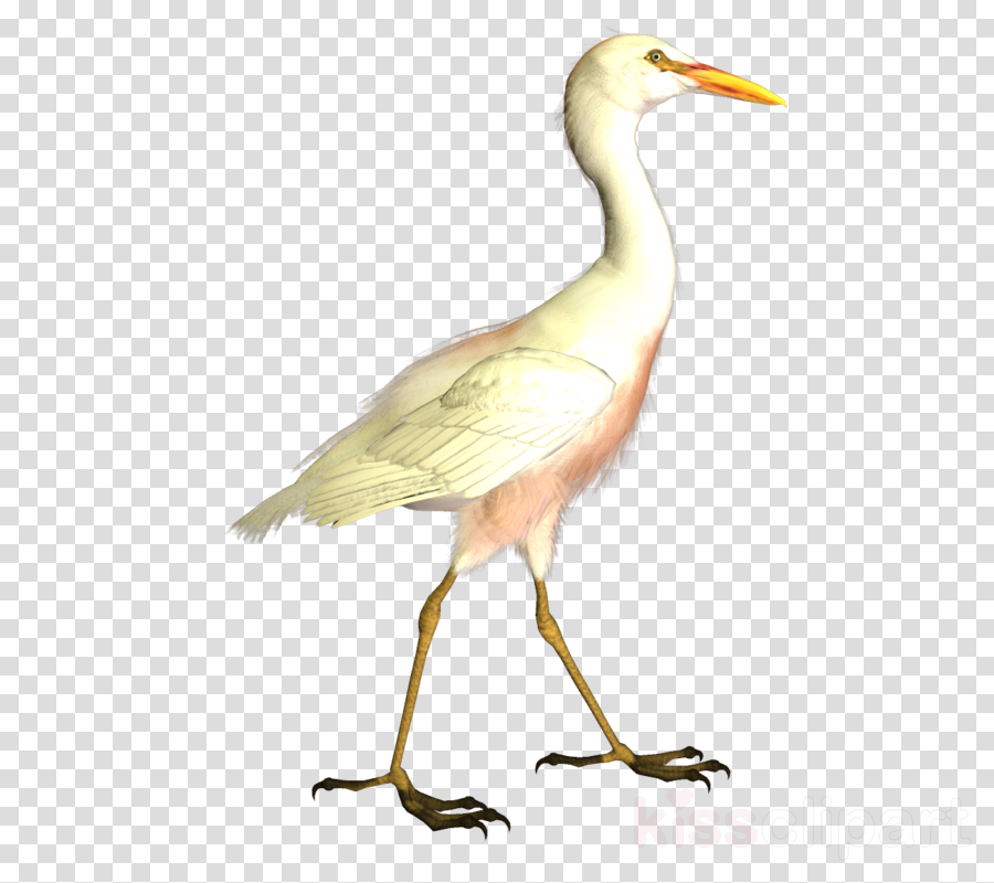 Bird Beak Cattle Egret Egret Ibis Clipart Bird Beak