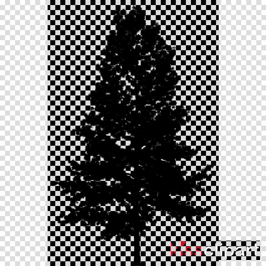tree balsam fir shortleaf black spruce white pine yellow fir
