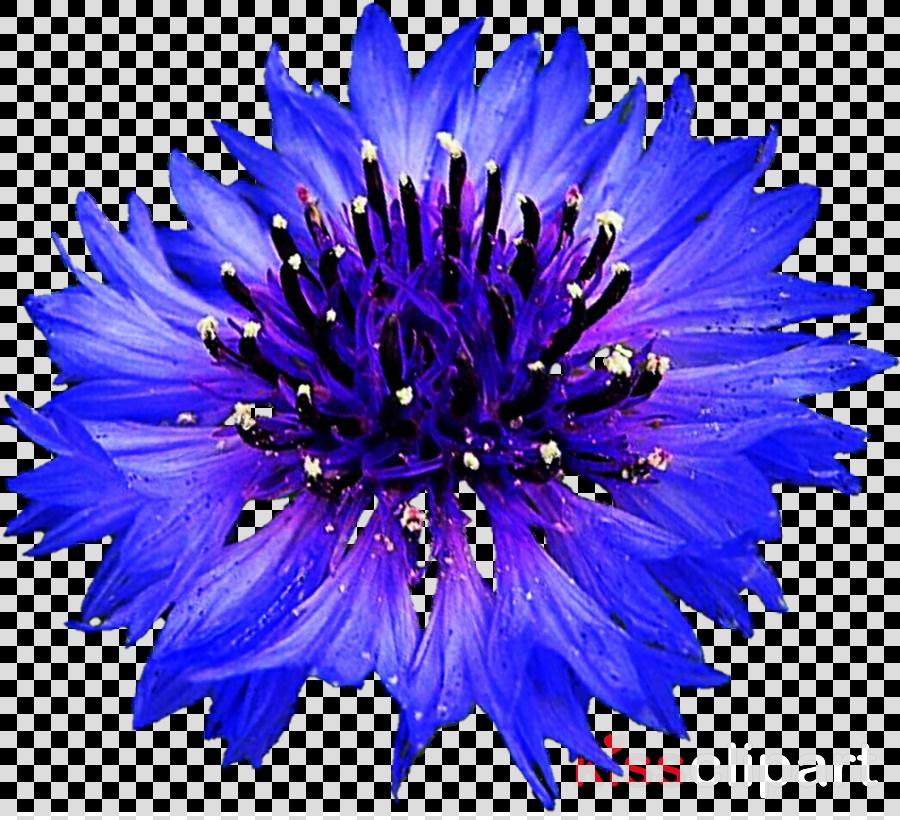 flower blue purple petal plant