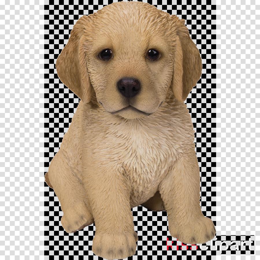 dog puppy labrador retriever golden retriever retriever