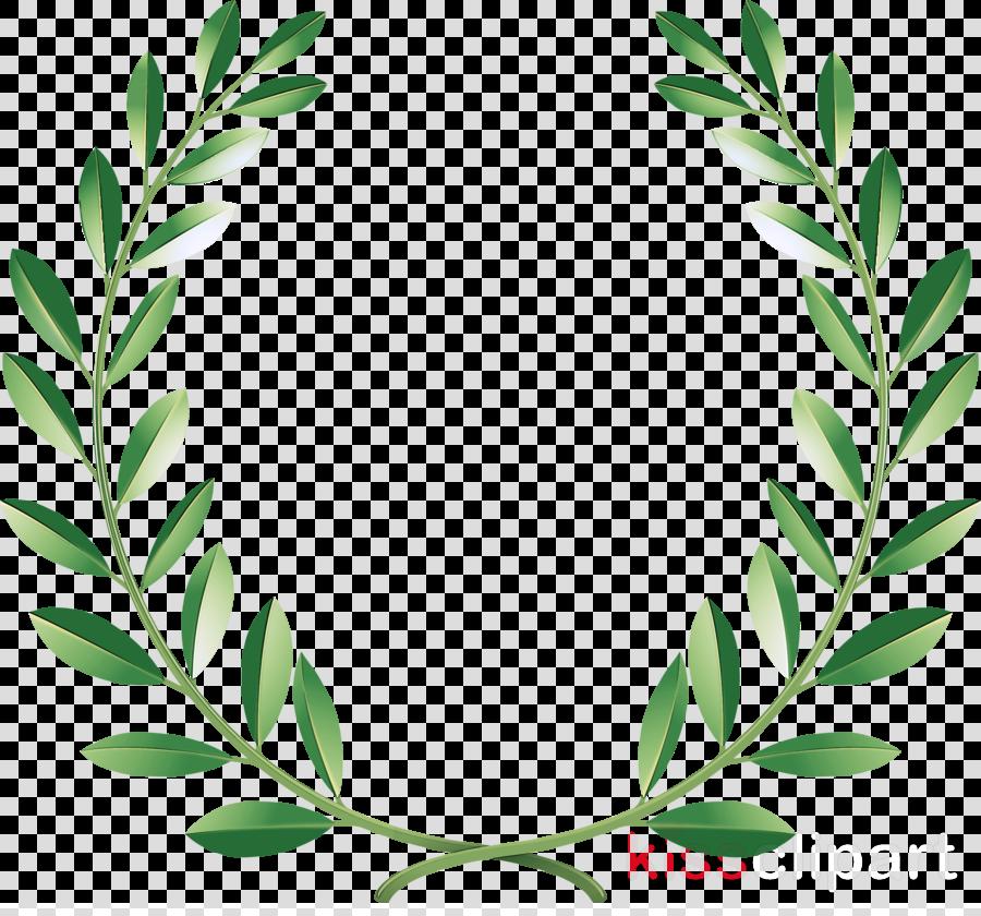 leaf plant herbal flower herb