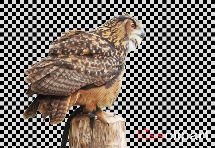 bird bird of prey hawk beak falcon
