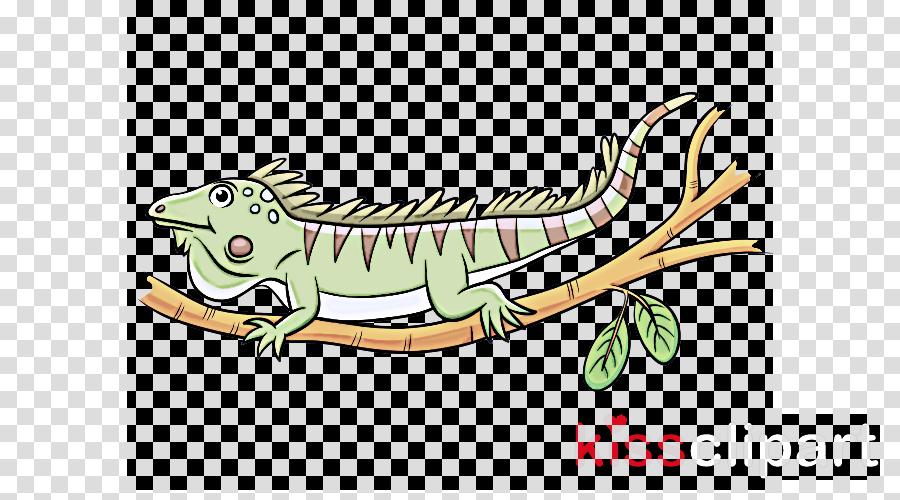 lizard reptile iguana iguania green iguana