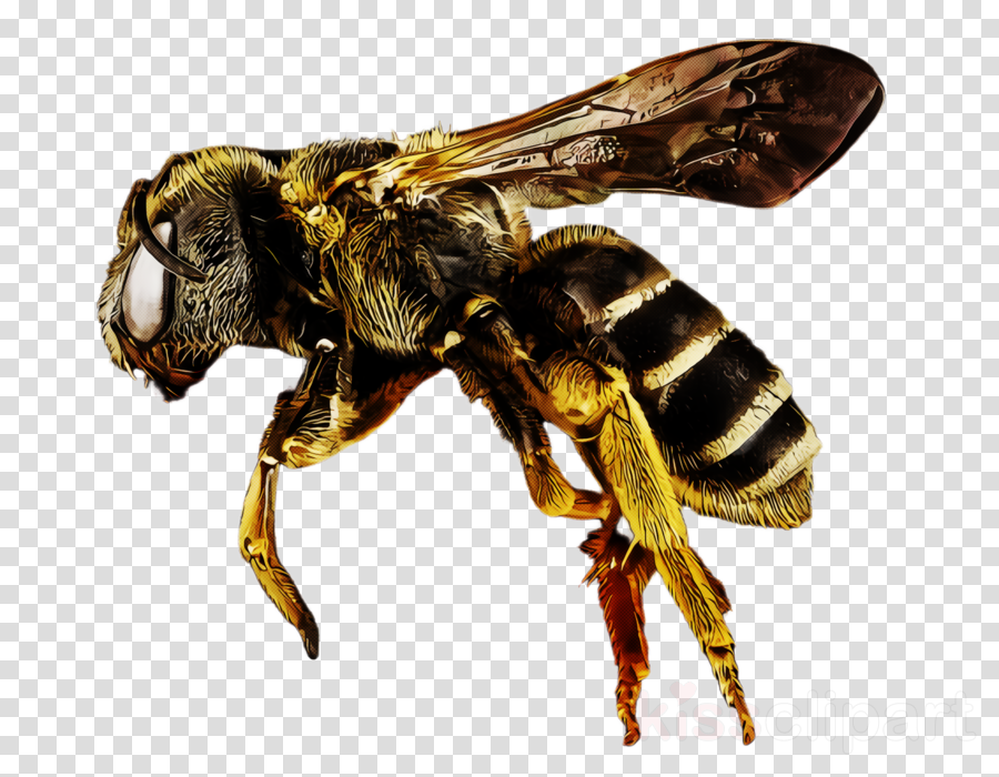 insect eumenidae bee membrane-winged insect megachilidae