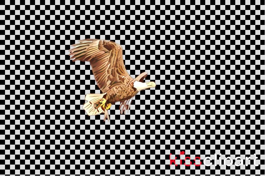 eagle bird bird of prey bald eagle golden eagle