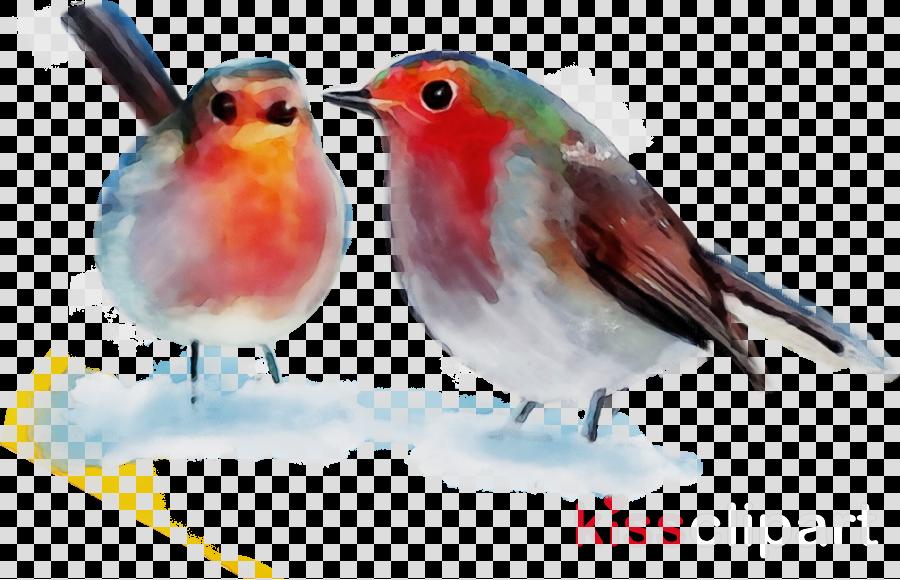 bird european robin beak songbird old world flycatcher