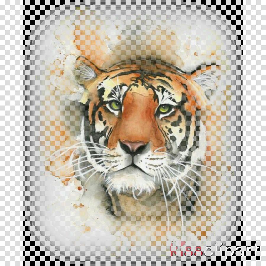 tiger bengal tiger siberian tiger wildlife head