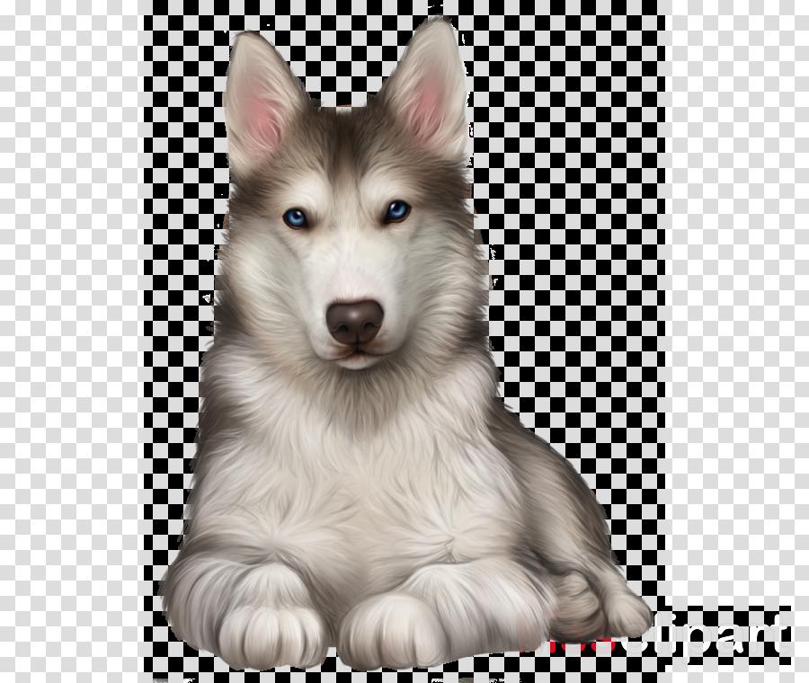 dog siberian husky alaskan malamute wolfdog snout