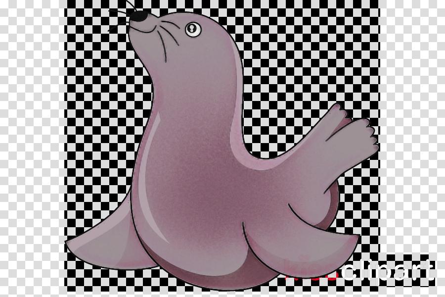 california sea lion seal cartoon fur seal walrus
