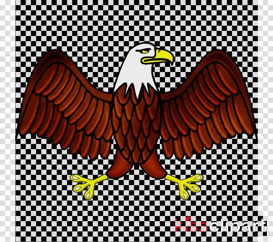bird eagle golden eagle bird of prey accipitridae