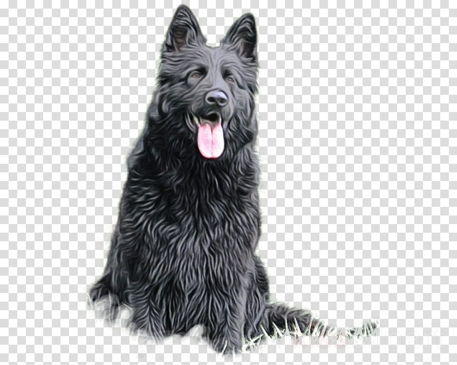 dog groenendael bohemian shepherd bouvier des ardennes belgian shepherd