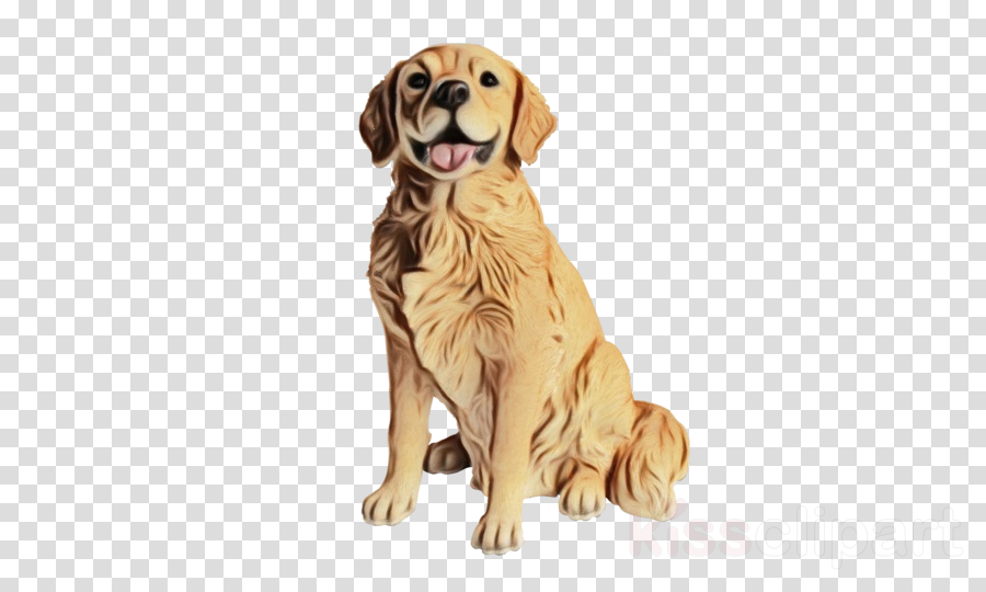 dog golden retriever retriever sporting group labrador retriever