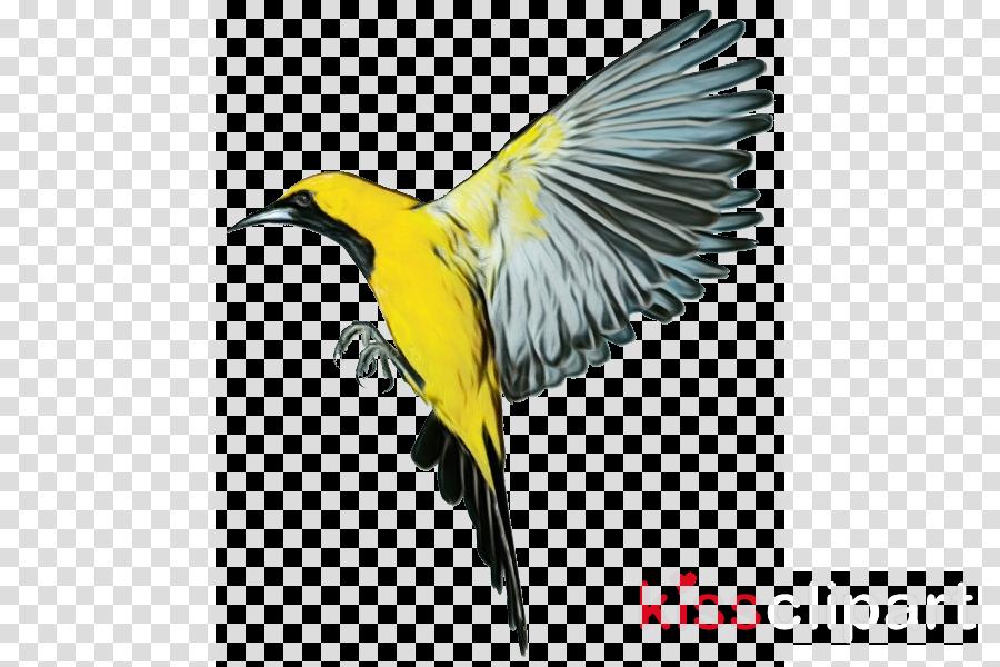 bird beak yellow wing old world oriole