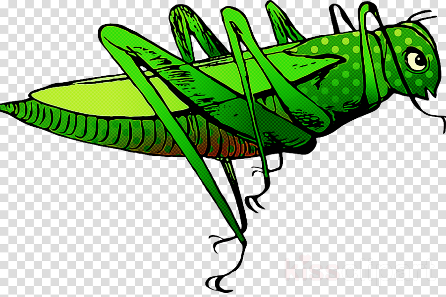 green insect cricket-like insect grasshopper coloring book