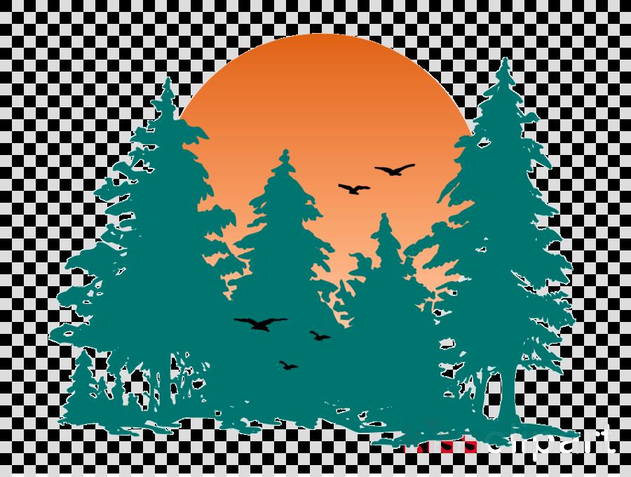 tree colorado spruce green oregon pine fir