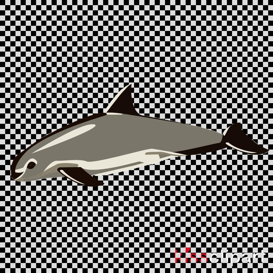 fin cetacea dolphin harbour porpoise fish