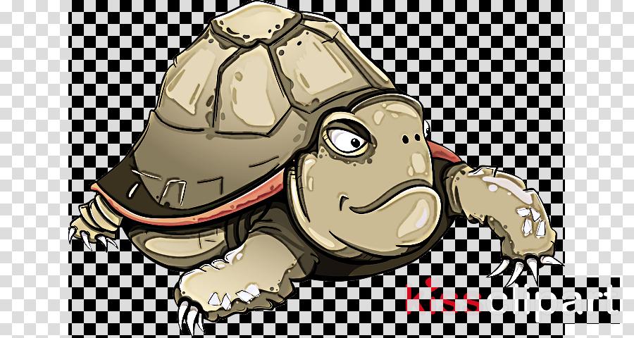 cartoon tortoise turtle animation sketch