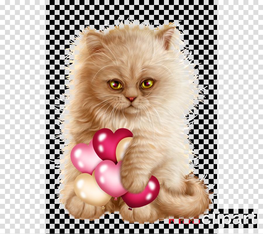 cat small to medium-sized cats pink persian kitten