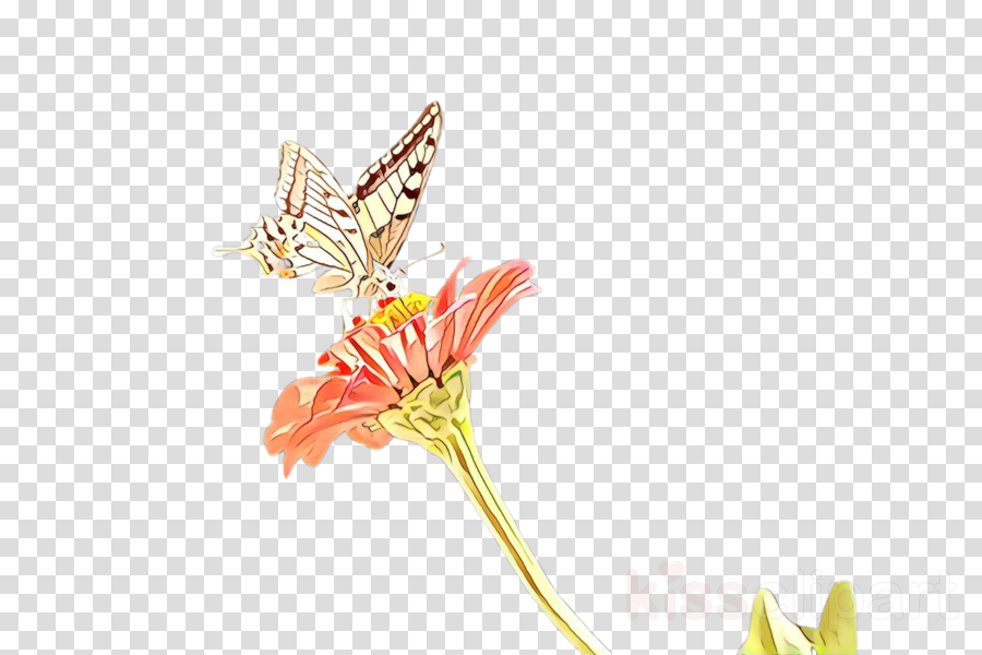 insect butterfly moths and butterflies flower plant