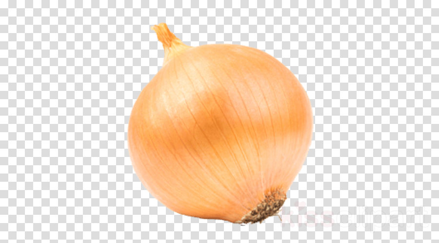 yellow onion vegetable onion shallot plant
