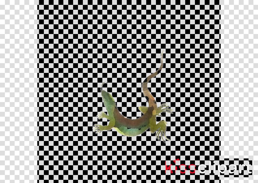 lizard reptile plant gecko wall lizard