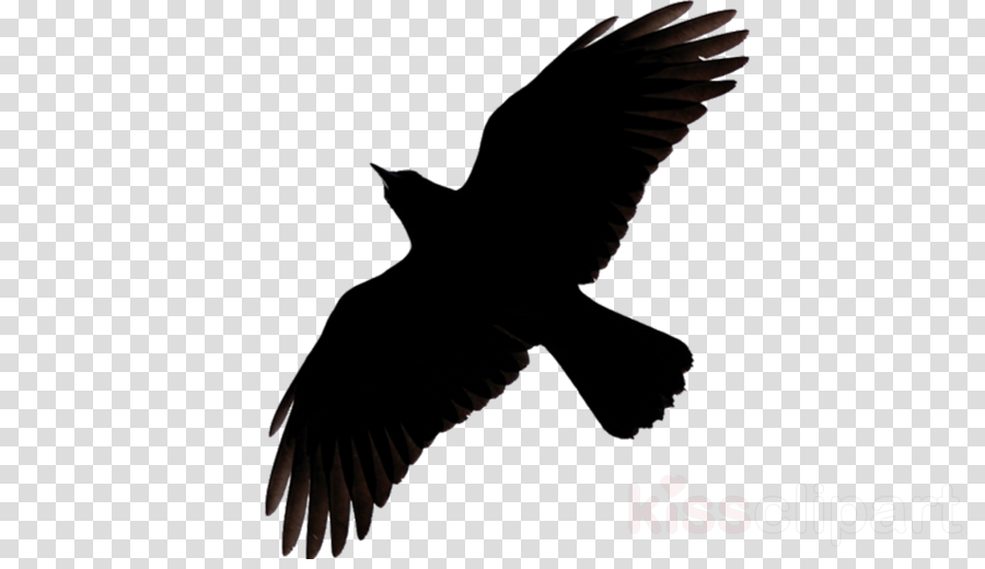 bird beak wing kite raven