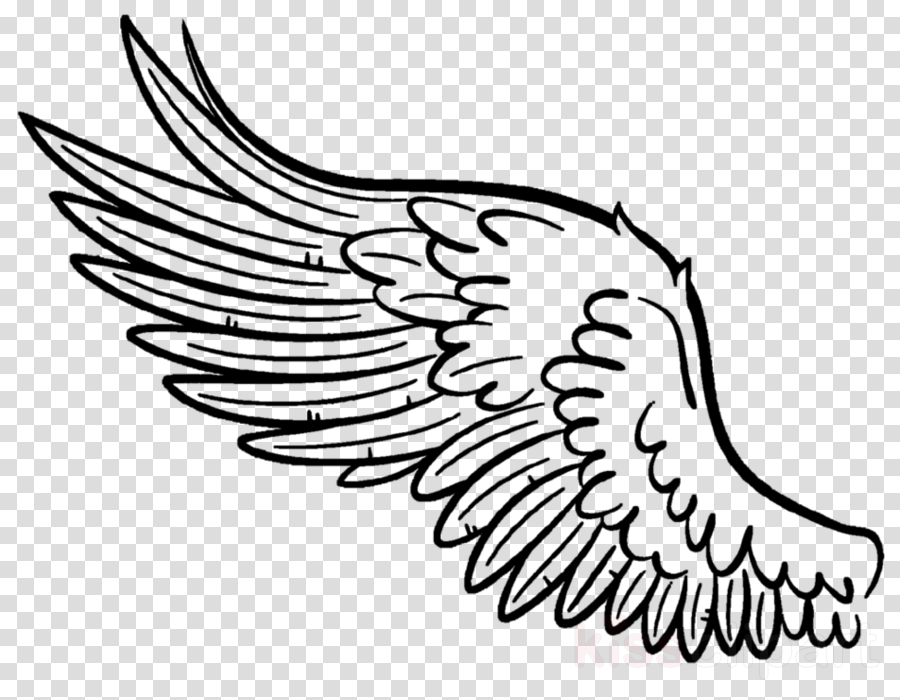 white wing line art eagle bird