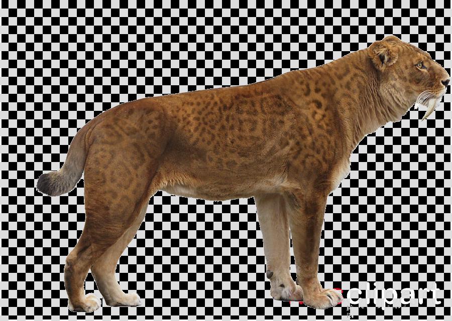 animal figure wildlife puma lion