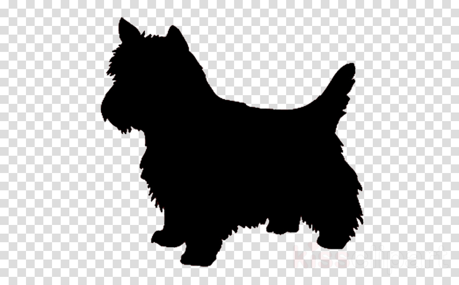 dog scottish terrier norwich terrier terrier cairn terrier