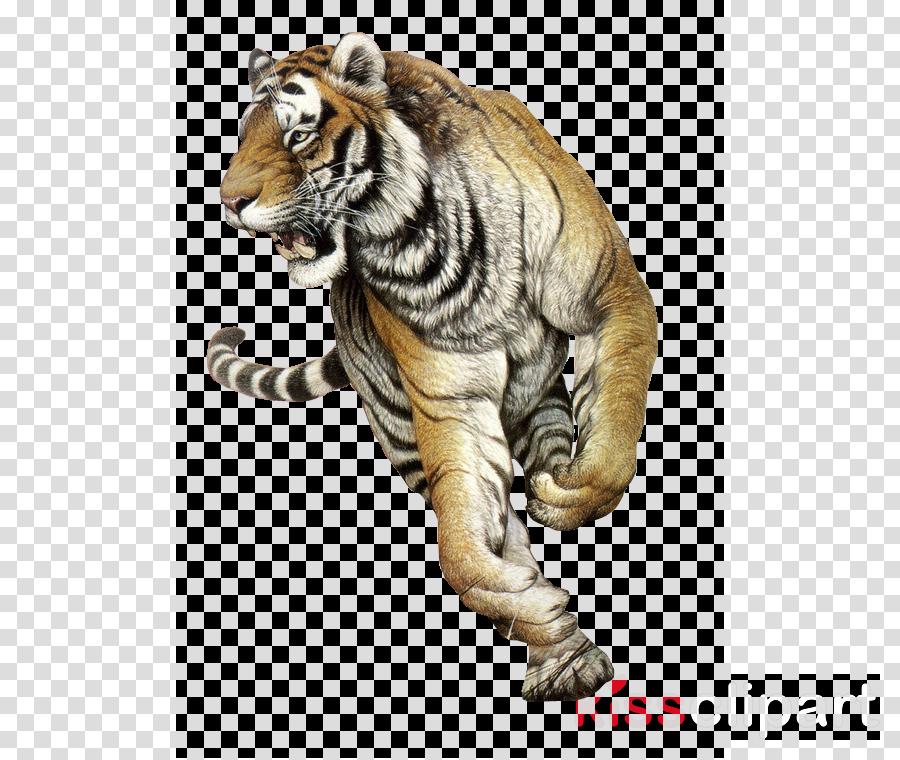 tiger bengal tiger siberian tiger wildlife animal figure