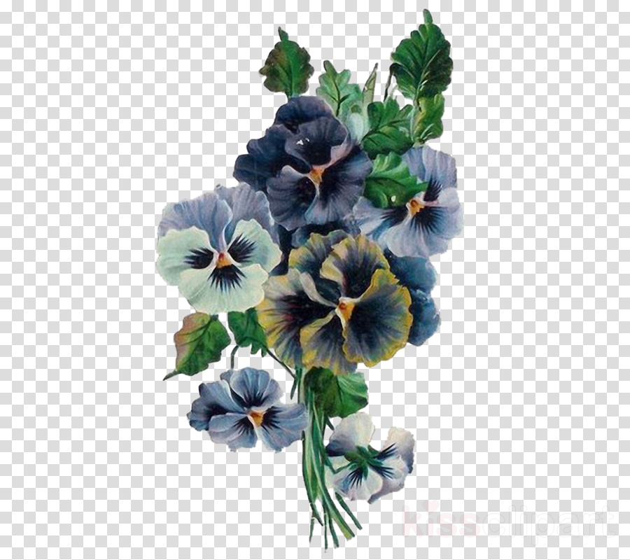 flower plant blue hawaiian hibiscus petal