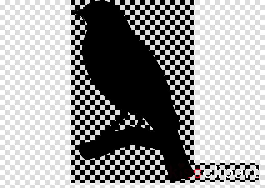 bird beak silhouette crow raven