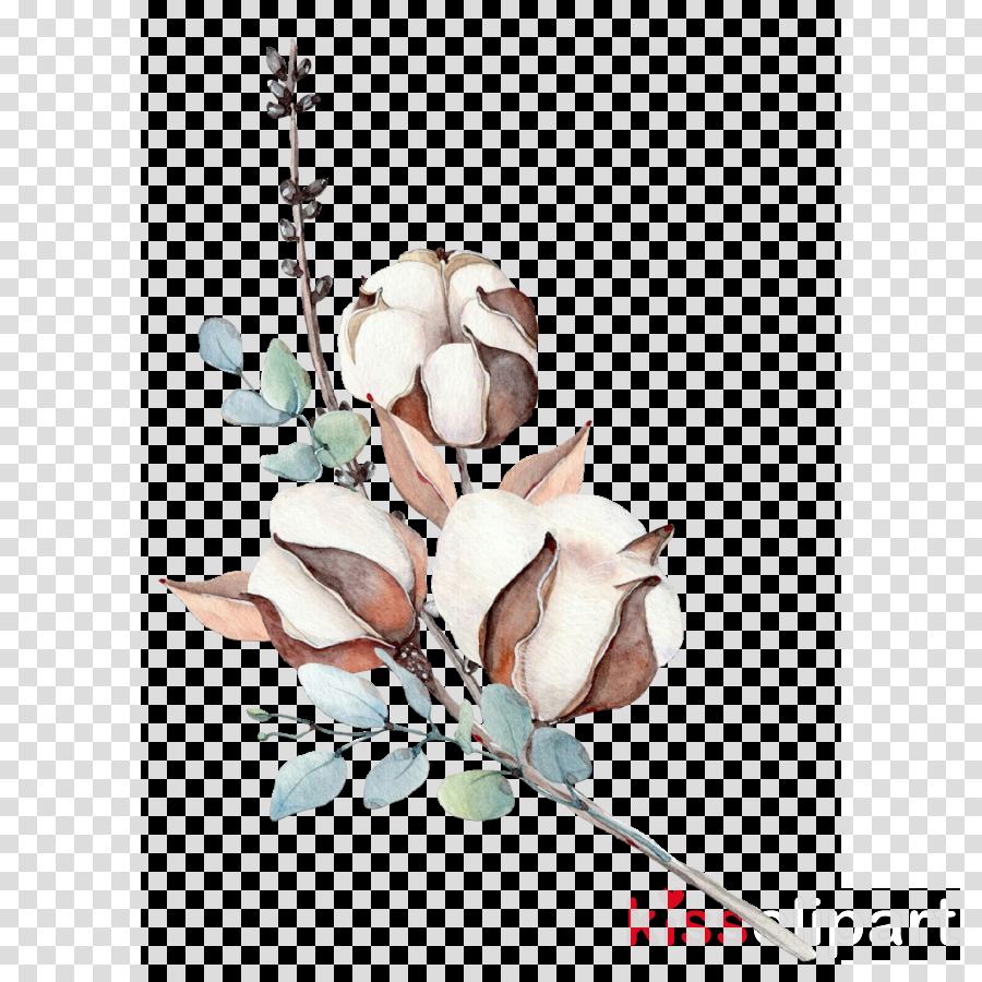 plant flower branch magnolia magnolia family