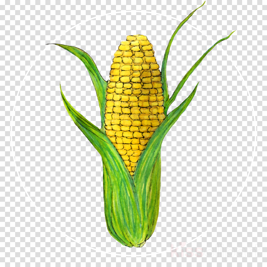 corn corn on the cob plant flower yellow