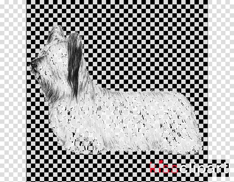 dog yorkshire terrier australian silky terrier terrier skye terrier