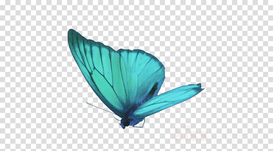 butterfly insect turquoise moths and butterflies wing