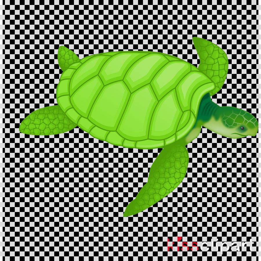 sea turtle green green sea turtle tortoise turtle