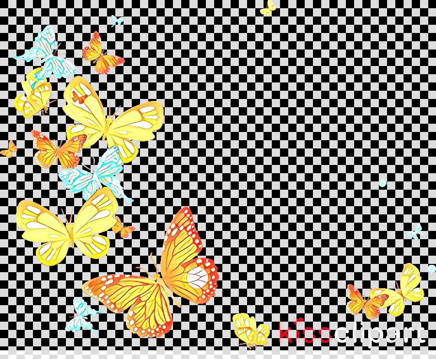 yellow butterfly moths and butterflies pollinator
