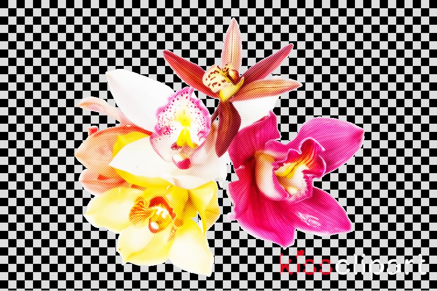 flower pink petal plant orchid