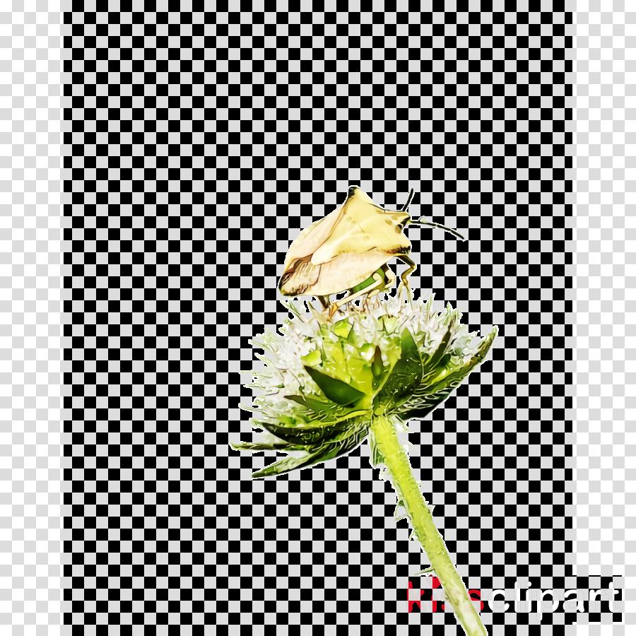 flower plant pedicel bud cut flowers
