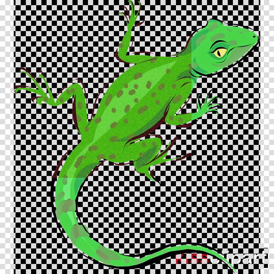 lizard reptile green european green lizard scaled reptile