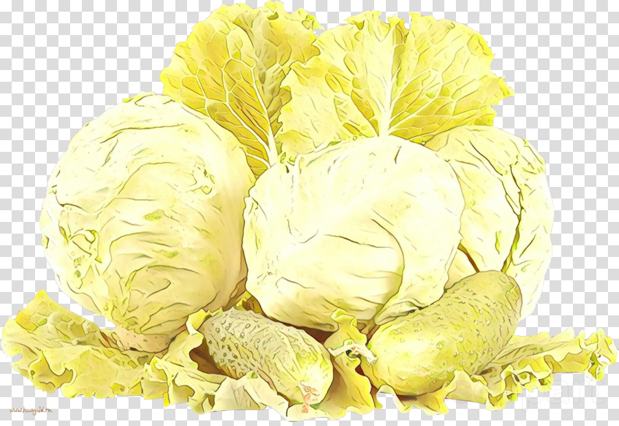 cabbage food wild cabbage plant vegetable