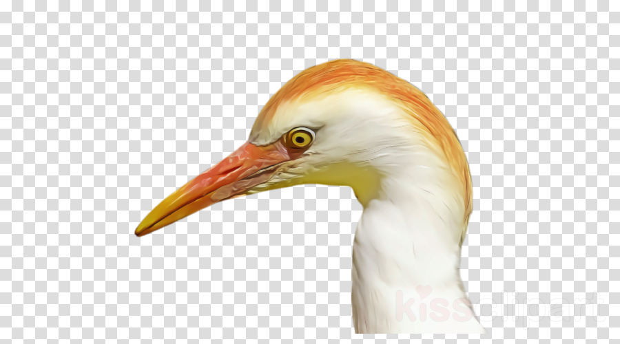 bird beak ibis close-up crane-like bird