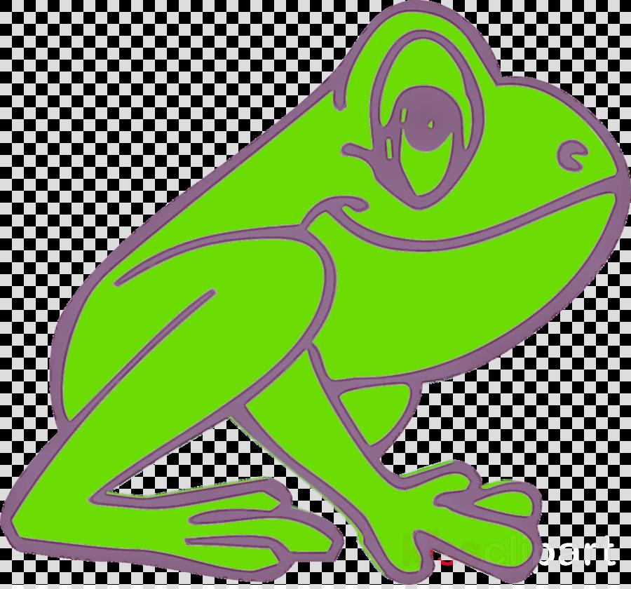green hyla tree frog true frog frog