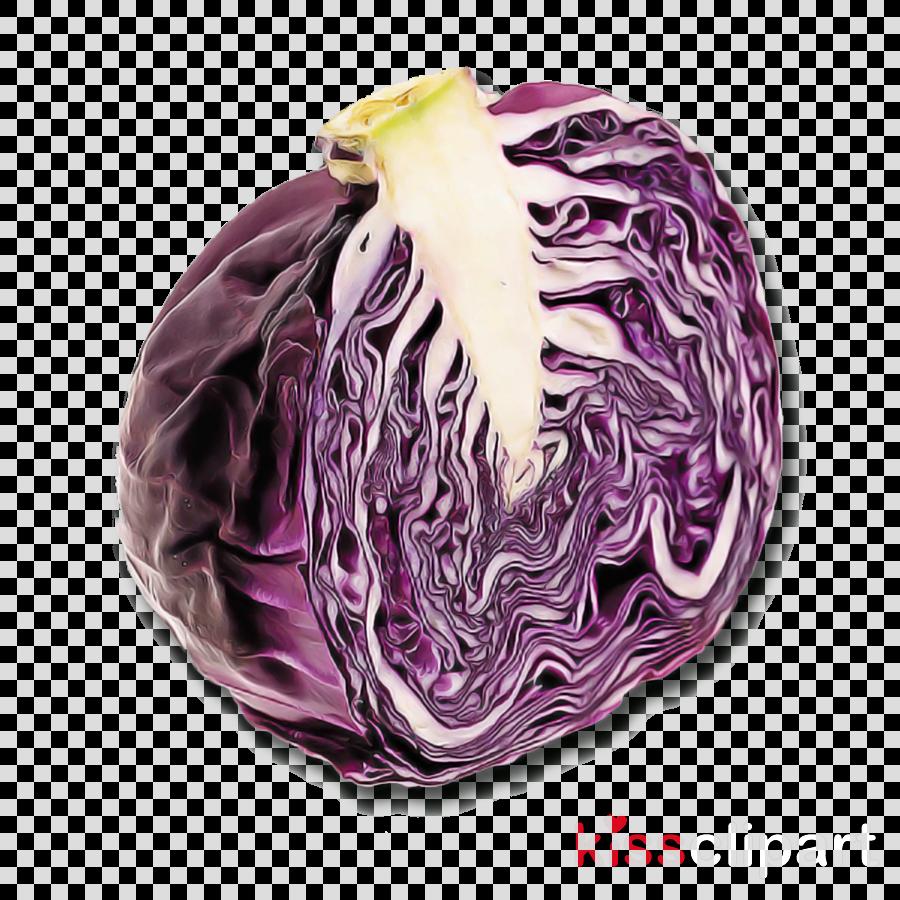 violet purple cabbage red cabbage vegetable
