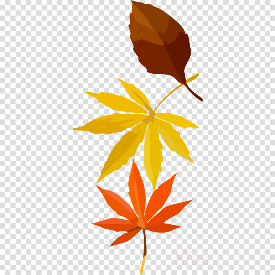 autumn leaf fall leaf yellow leaf