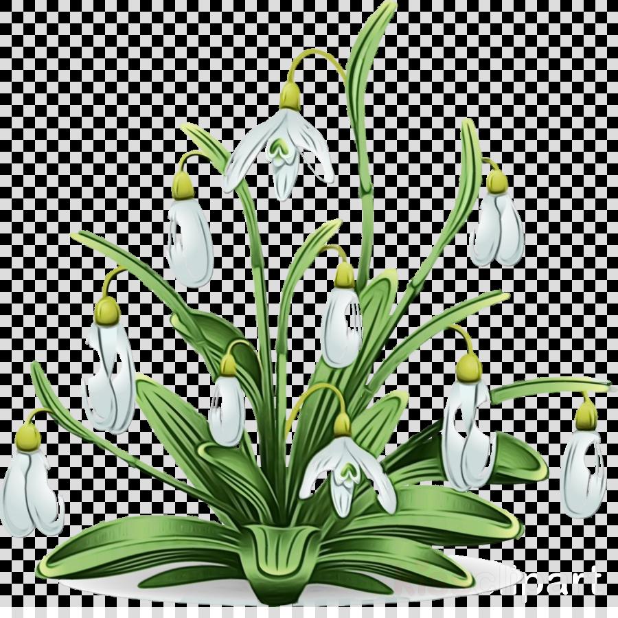 flower galanthus snowdrop plant summer snowflake