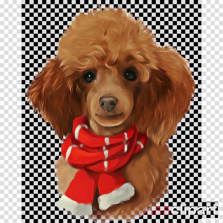dog puppy toy poodle dog clothes poodle